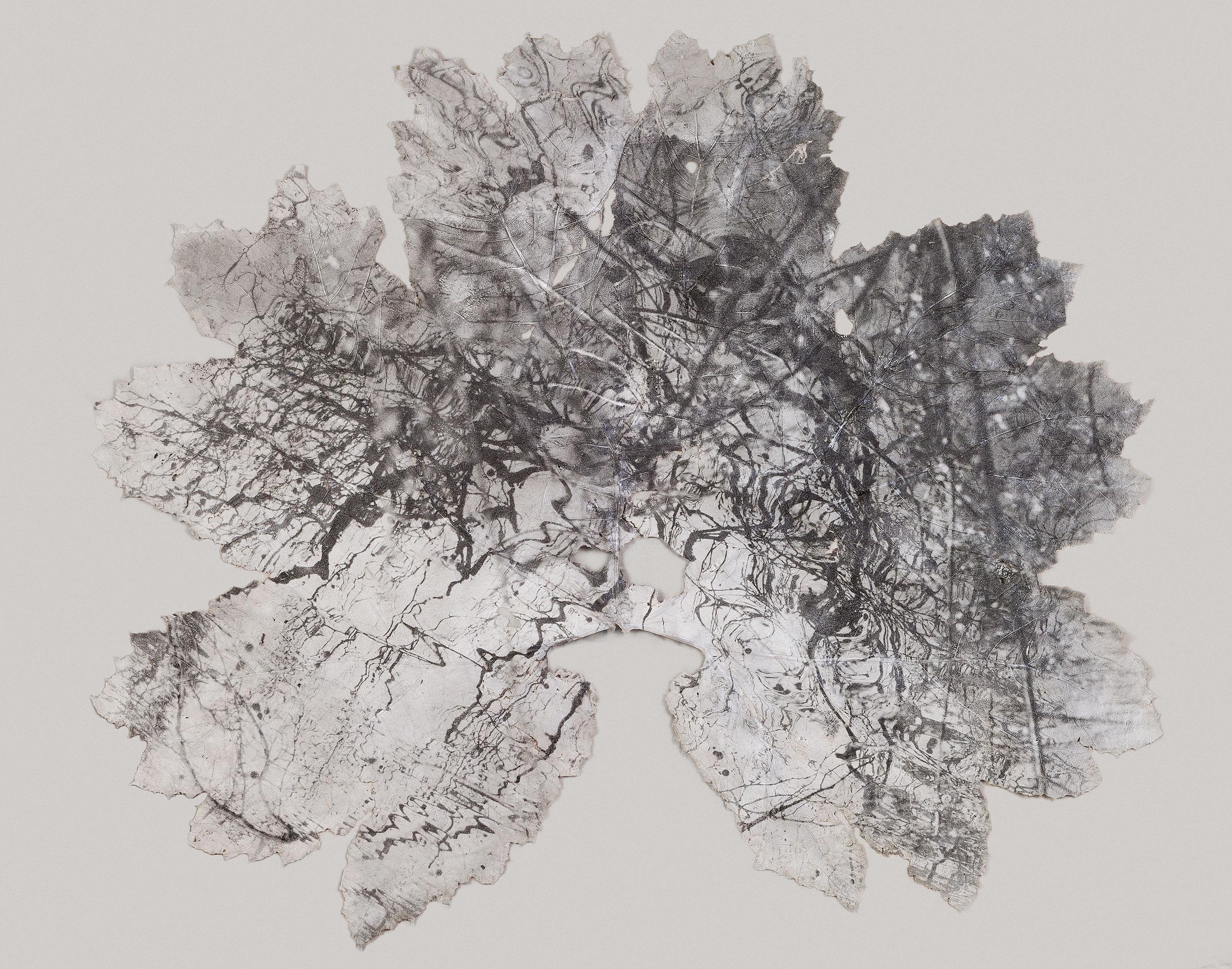 Silver gelatin print on Gunnera Manicata leafUntitled - 240cm x 220cm - Dominique Lacloche