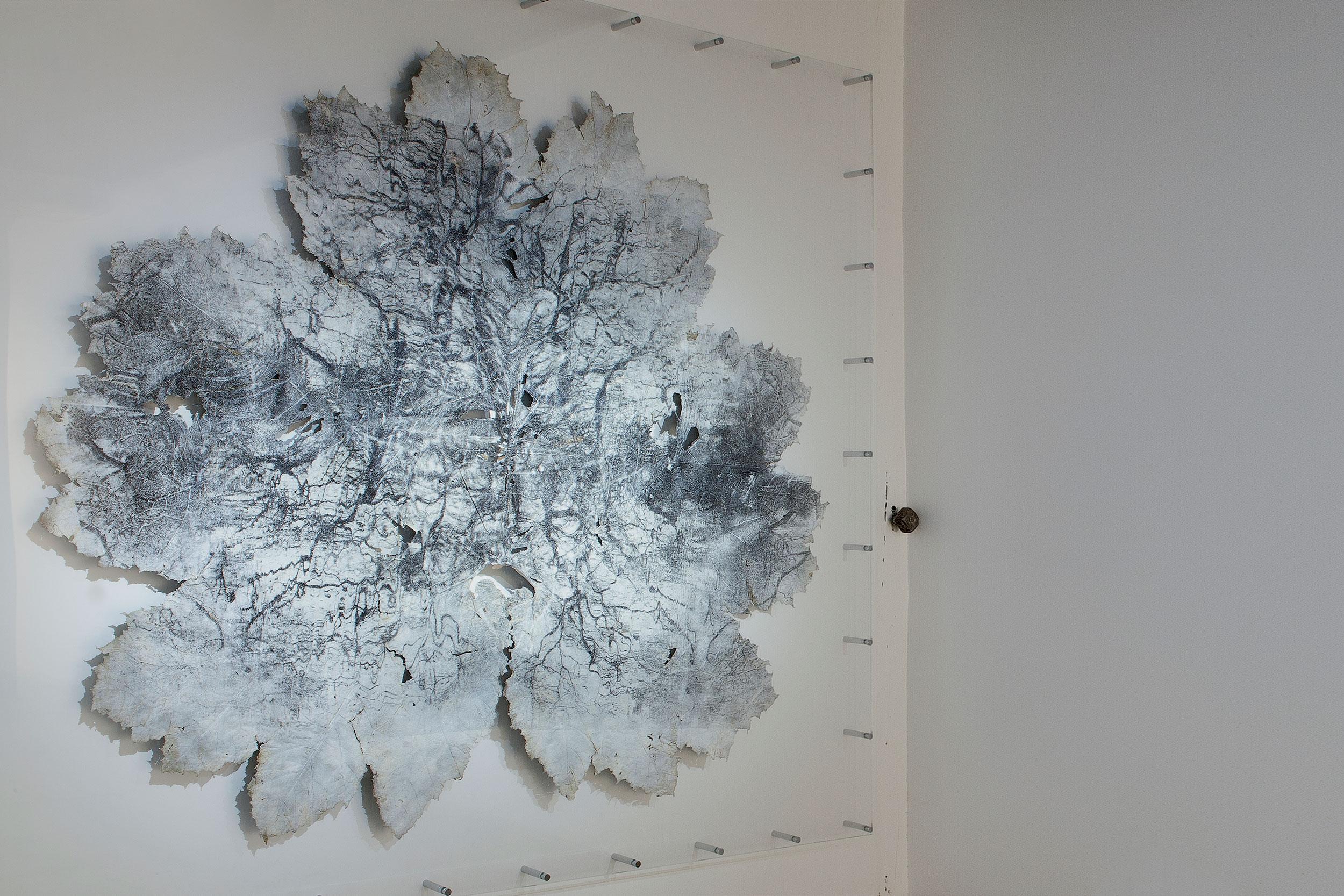 Silver gelatin print on Gunnera Manicata leaf - Untitled - 270 cm x 240cm - Dominique Lacloche