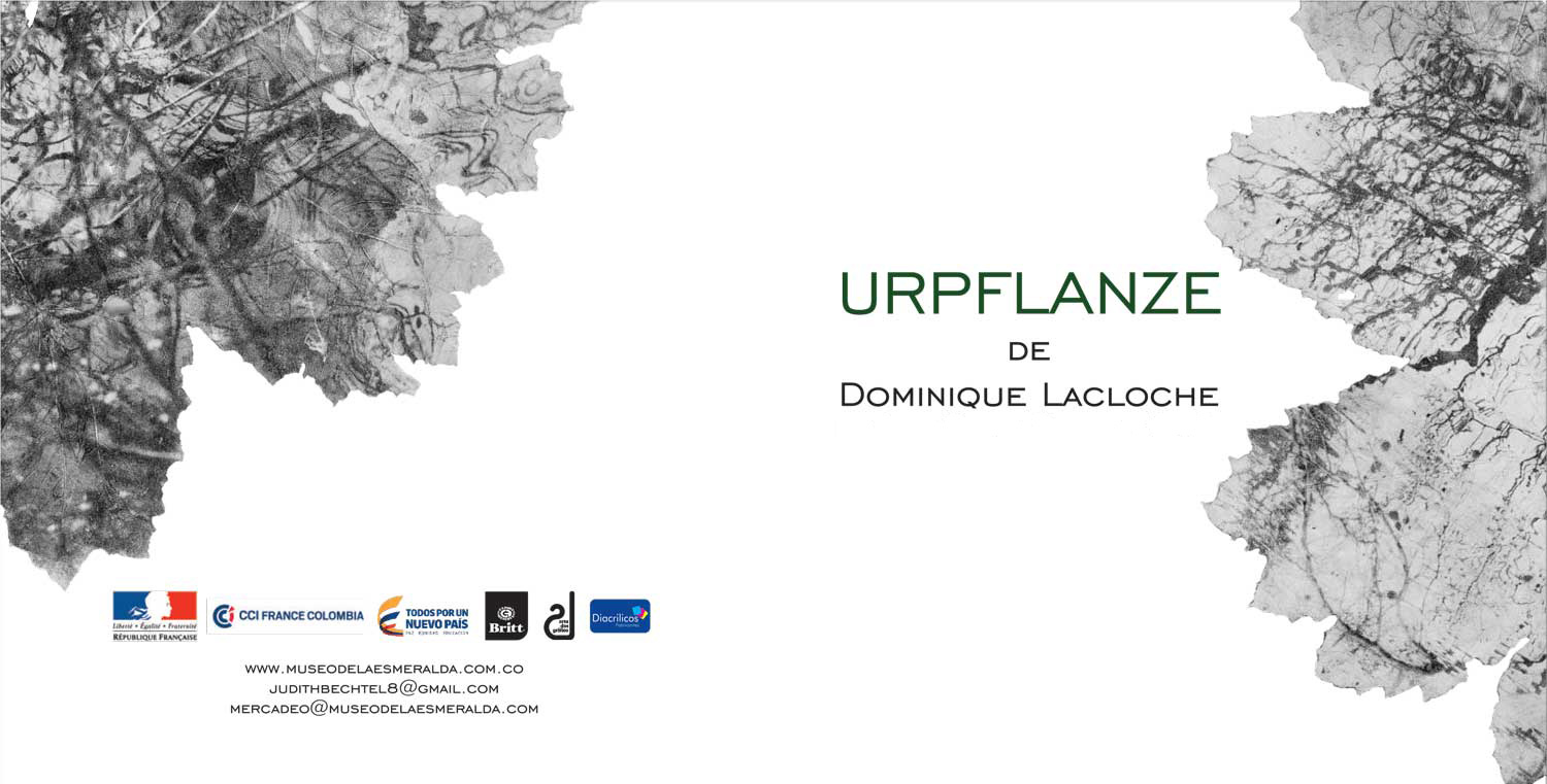 slide2-invitation-urpflanze-dominique-lacloche